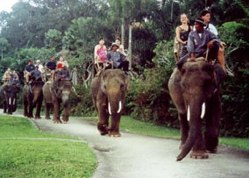 bali-elephant-safari-park-and-lodge-__-elephants-elephant-art-elephants-museum-and-accommodation
